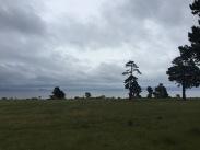 Lake Taupo. Rain.