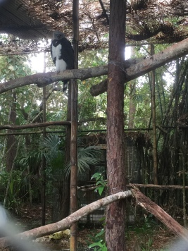 Harpy eagle. Think this was the female. She was incredible.