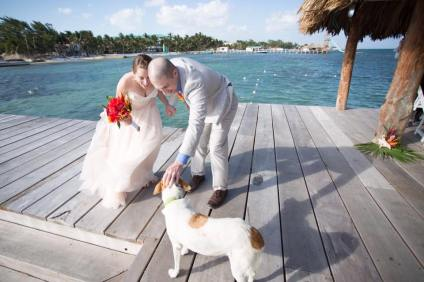 Monkey wishes the newly married couple great success and happiness